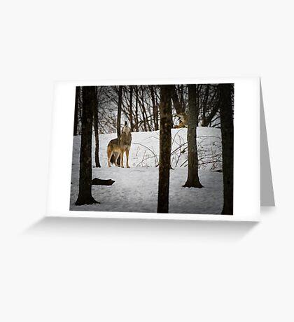 Coyote Howlin' Greeting Card