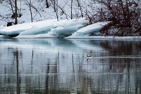 Bufflehead Duck and Ice Formation, Niagara River, Ontario by ArianaMurphy