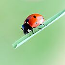 Ladybug and balance by Francesco Malpensi