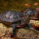 Red Eared Sliders by Larry Trupp