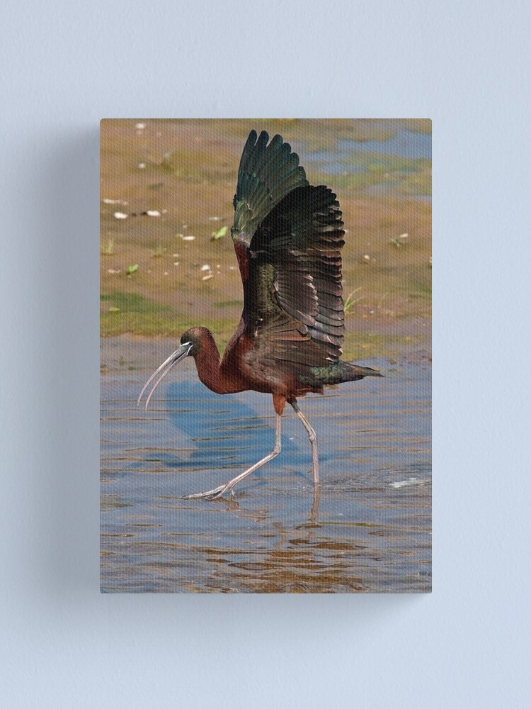 Alternate view of Strutting the Stuff Canvas Print