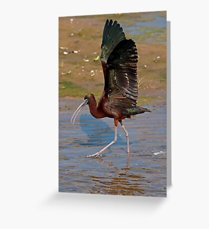 Strutting the Stuff Greeting Card