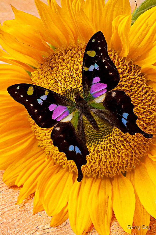 "Blooming Makeup: ""Purple Butterfly On Sunflower"" By Garry Gay"
