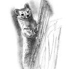 «Sable marten sketch» de belettelepink