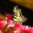 My First Butterfly of Spring :) by Sharksladie