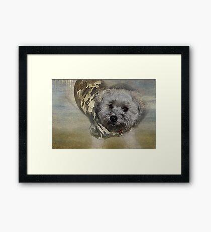 Adventure Pup Framed Print