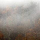 Cataloochee Morn by Gary L   Suddath