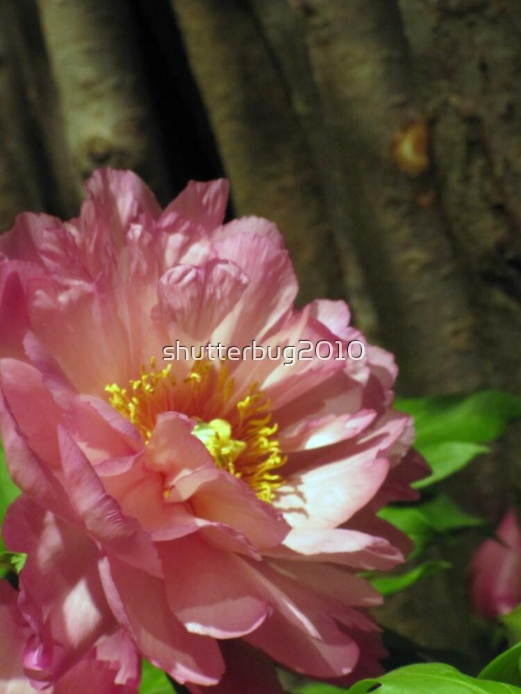 Blushing Beauty by shutterbug2010