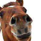 Horses can smile by Virag Anna Margittai