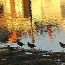 Lagoon Reflecting Sunset by Gloria Abbey