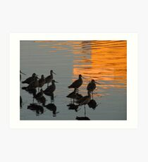 Wading Willets Art Print