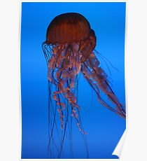 Jellyfish, Atlanta Aquarium Poster