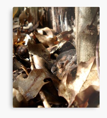 Master of Camouflage Metal Print