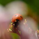 Dreaming of a Lady Bug by TriciaDanby