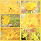 Yellow spring by aMOONy