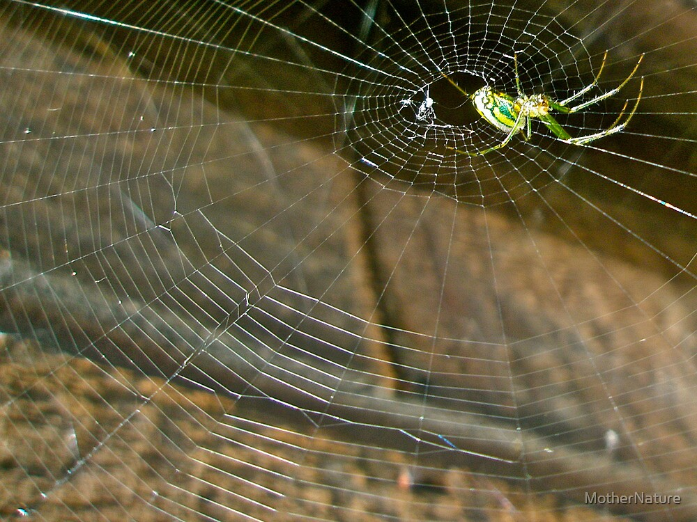 Orb Web Weaver Spider - Leucauge venusta by MotherNature