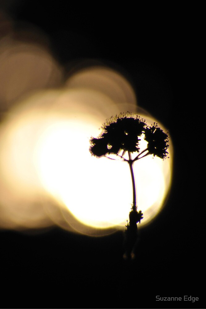 Evening silhouette by Suzanne Edge