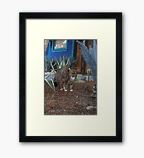 Don't mess with me, Dog! Framed Print