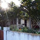 Sunlight Venice Beach California Bungalows by Tiffany Bauer