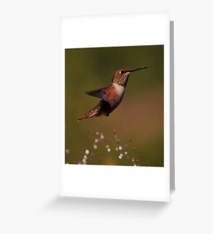 HUMMINGBIRD PLAYING Greeting Card