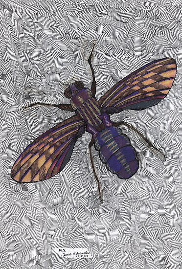 074 - FLY (Ink and coloured pencils) - 1998 by BLYTHART