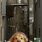 Good Dog. by JNRYJD