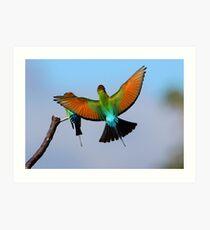 ''Rainbow Bee-eaters'' Art Print