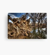 Rooted...but not the one by Brad Grove Canvas Print