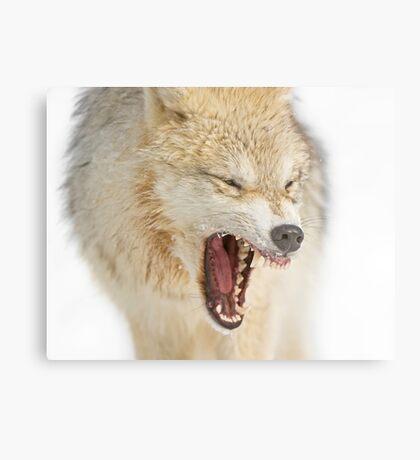 Mean looking Yawn! Metal Print