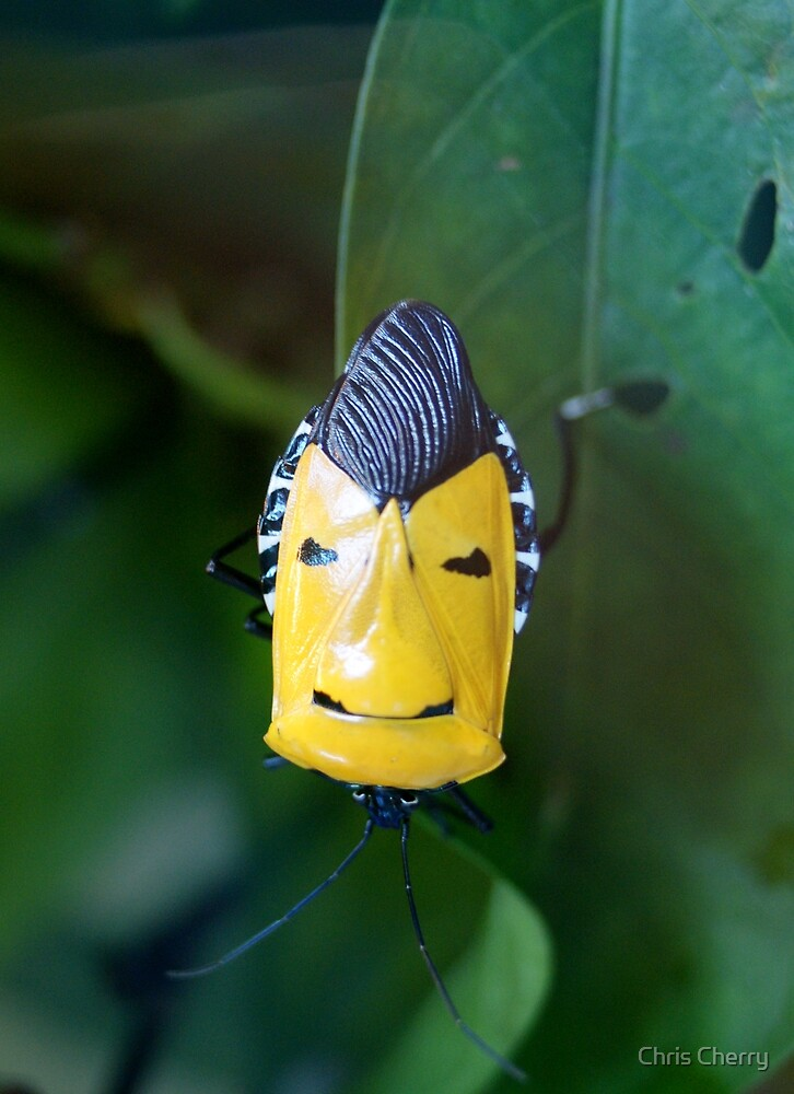 Elvis Reincarnated as a Bug?  by Chris Cherry