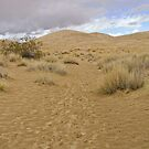 The Great Mojave by Christine Frydenborg Dargon