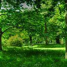 English Woodland by John Hare