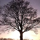 Sunset oak by Hucksty