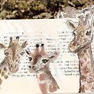 Giraffes by babibell