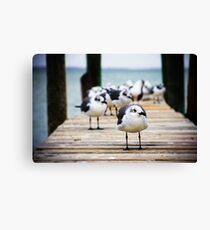 Gulls on the Bay Canvas Print