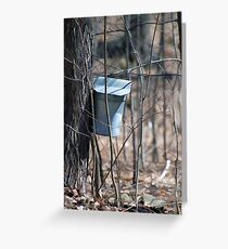 Maple Syrup  Greeting Card