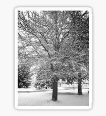 Snow Sticker