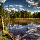 Lochan close to Loch Garten by Gabor Pozsgai