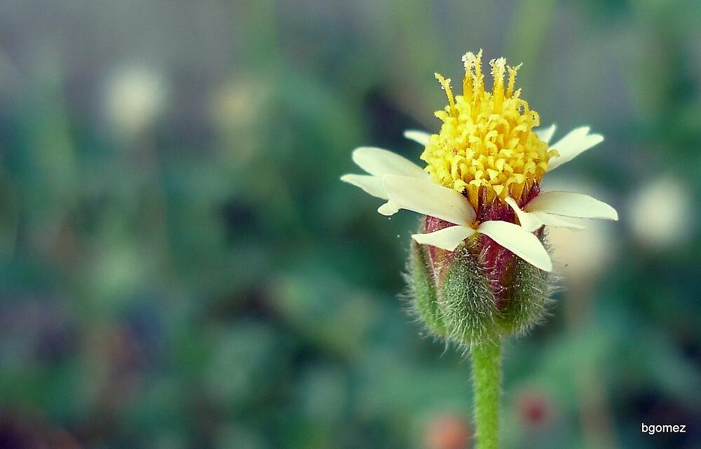 Dandelion by Blaise Cedrick Gomez