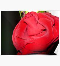 Pure Red Velvet Poster