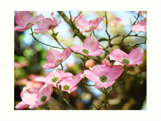 Trees pink dogwood tree flowers art baslee troutman art prints by trees pink dogwood tree flowers art baslee troutman by basleeartprints mightylinksfo