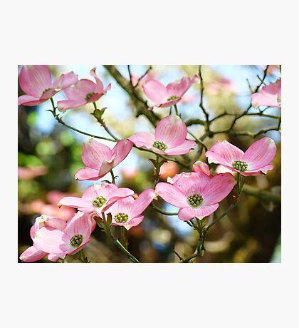 Trees Pink Dogwood Tree Flowers art Baslee Troutman Photographic Print