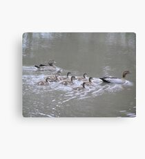 Duck Family on the dam Canvas Print