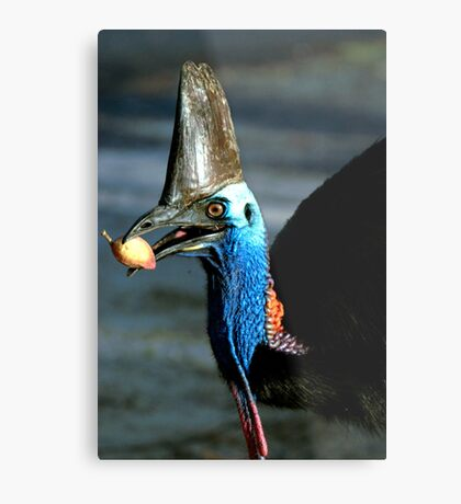 Take a bite - Etty Bay Cassowary Metal Print