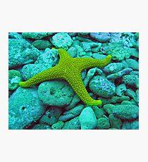 Four arm starfish  Photographic Print