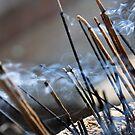 Drifting Incense by Chamika Amarasiri