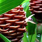 Zingiber Spectabile Bud - Kew Gardens by Victoria limerick