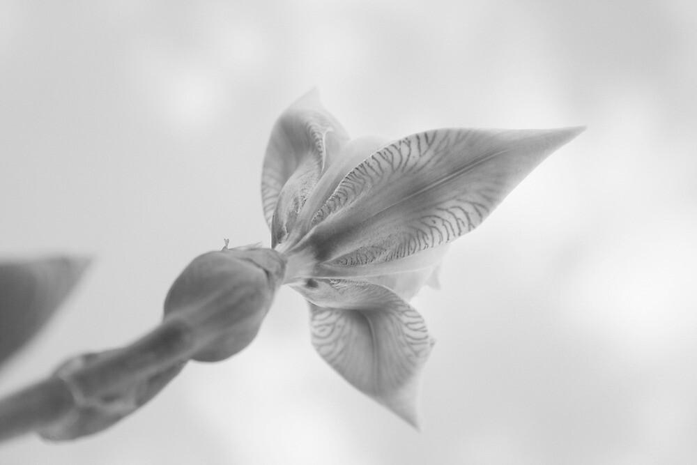 B&W Flower2010 by MichaelaSteindl