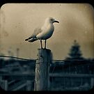 Seagull - Vintage lens by pennyswork