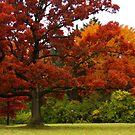 Red Oak by Lyle Hatch
